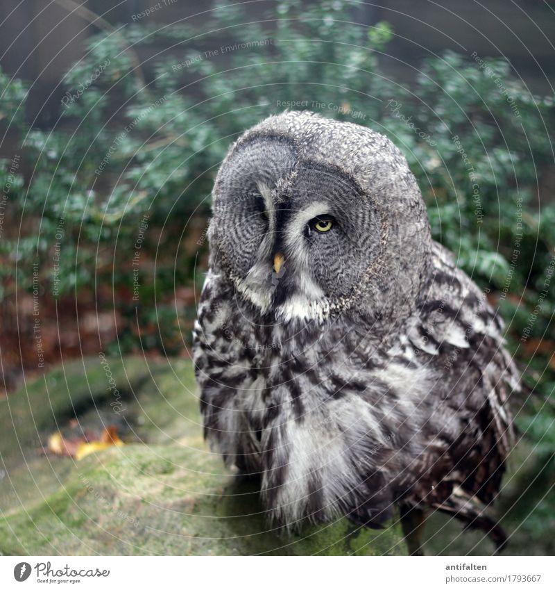 Komischer Vogel Freizeit & Hobby Tourismus Ausflug Herbst schlechtes Wetter Regen Park Stein Sträucher Tier Wildtier Tiergesicht Flügel Krallen Zoo Gehege Käfig