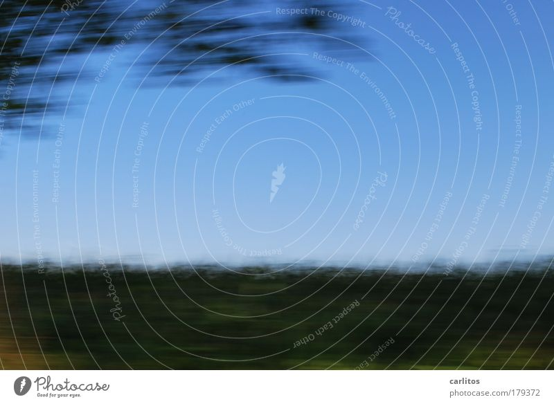 Mais 09 [Schnellansicht] Himmel Baum grün blau Pflanze Bewegung Feld Geschwindigkeit Landwirtschaft Dynamik Ackerbau ökologisch nachhaltig Straßenrand