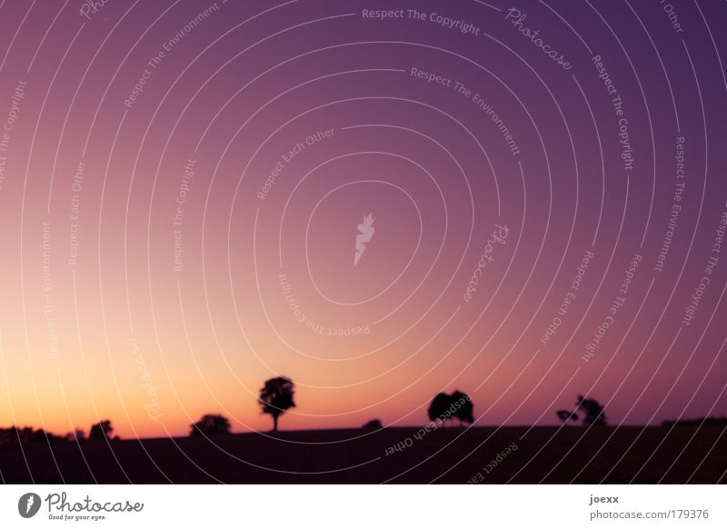 Unscharf (oder:Schärfe wird überbewertet...) Himmel Natur Baum Pflanze Sommer gelb Erholung Landschaft Luft Erde Hügel violett Nachthimmel Gegenlicht Wolkenloser Himmel