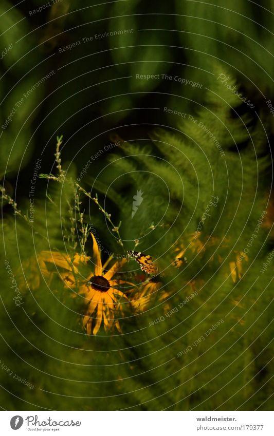 Farn, Blume, Schmetterling schön Blume Sommer Hoffnung ästhetisch Warmherzigkeit Schmetterling verstecken Schüchternheit Tier Farn Echte Farne Spiegellinsenobjektiv (Effekt)
