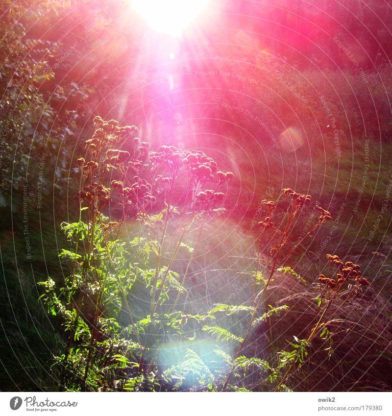 Rotlichtmilieu Farbfoto Außenaufnahme Nahaufnahme Menschenleer Textfreiraum rechts Tag Lichterscheinung Sonnenlicht Sonnenstrahlen Gegenlicht