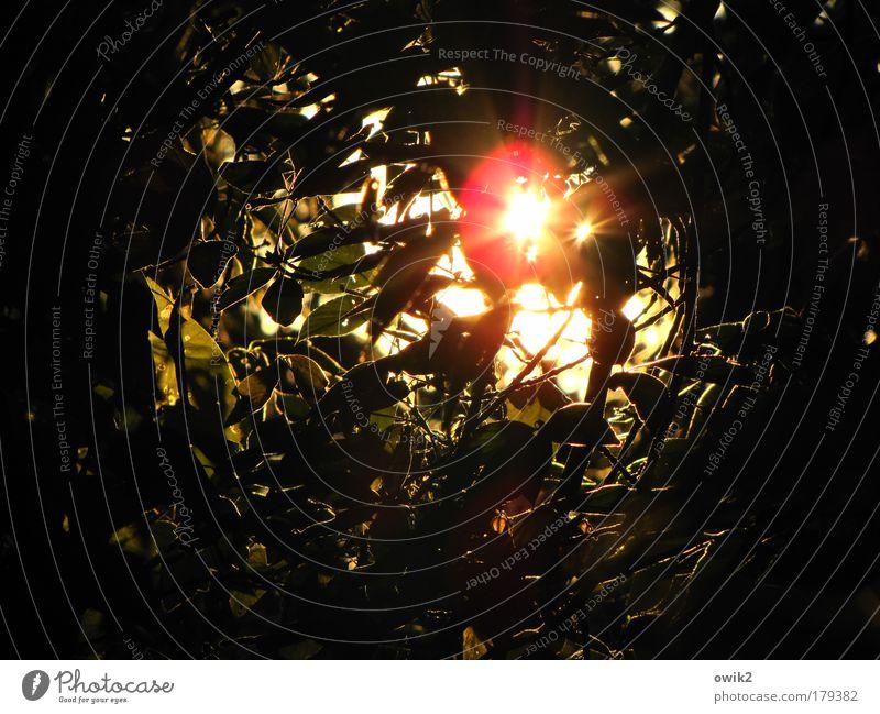 Mikrowelle Natur Baum Pflanze Sommer ruhig Blatt Gefühle Glück Wärme Landschaft Stimmung glänzend Umwelt gold Wachstum Romantik