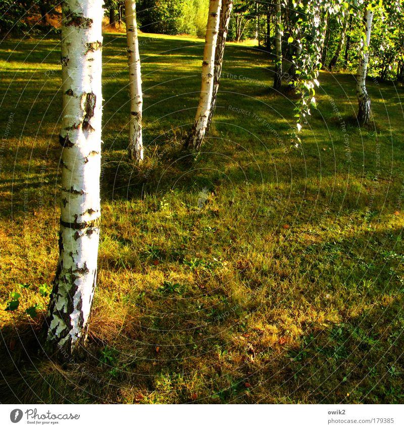September Natur schön Baum Pflanze Sommer Blatt Wald Umwelt Landschaft Wiese Wärme Gras Stimmung Erde Wetter natürlich
