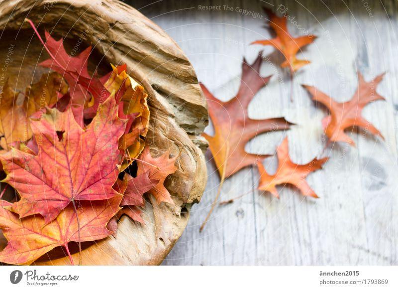 Herbstzeit schön rot Erholung Blatt ruhig gelb Holz braun orange Dekoration & Verzierung fallen Meditation Schalen & Schüsseln