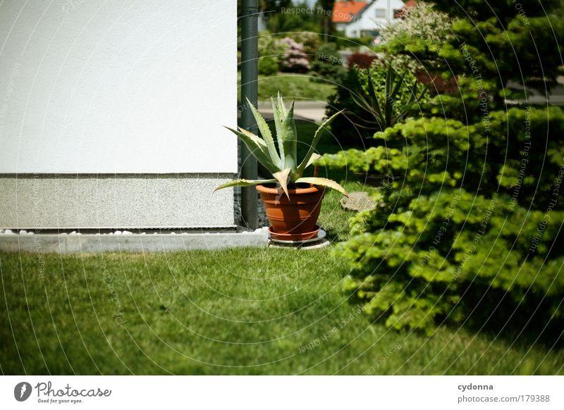 Kleintexas Natur schön Haus Umwelt Leben Wiese Wand Garten Mauer träumen ästhetisch Zukunft Lifestyle Wandel & Veränderung Wunsch einzigartig