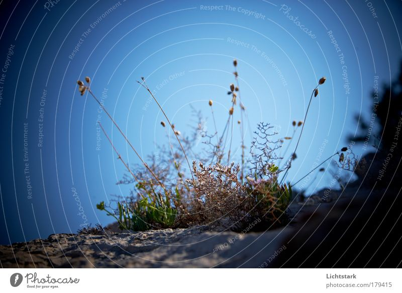 träume doch mal Himmel grün blau Pflanze Blume Tier Herbst Freiheit Gras Umwelt Sand Luft Wärme Ausflug Sträucher Vergänglichkeit