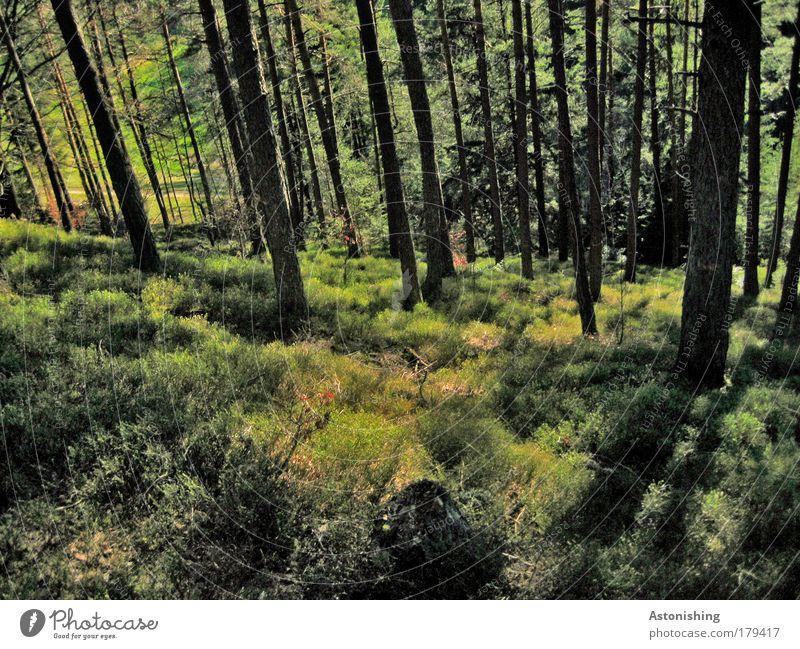 >>LINIERT mit Rand<< Natur Baum Sonne grün Pflanze Sommer Blatt schwarz Wald Gras Wärme Landschaft braun Wetter Umwelt hoch