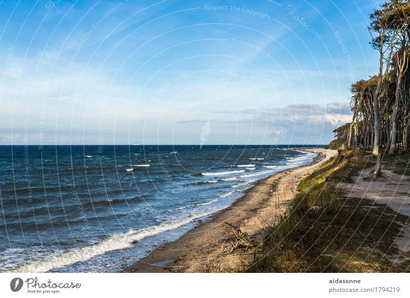 Strand Himmel Wasser Landschaft ruhig Wald Küste Wellen Europa Schönes Wetter Ostsee Sehenswürdigkeit Gelassenheit Kleinstadt Deutsch geduldig