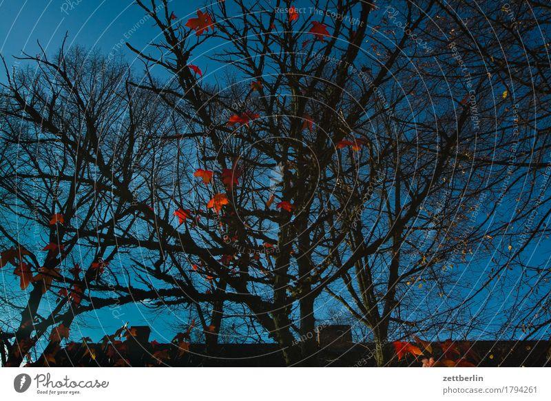 Rote Blätter Herbst Blatt Herbstlaub Färbung Baum Baumstamm Ast Zweig Blattgrün Himmel Wolkenloser Himmel Textfreiraum Menschenleer rot Endzeitstimmung