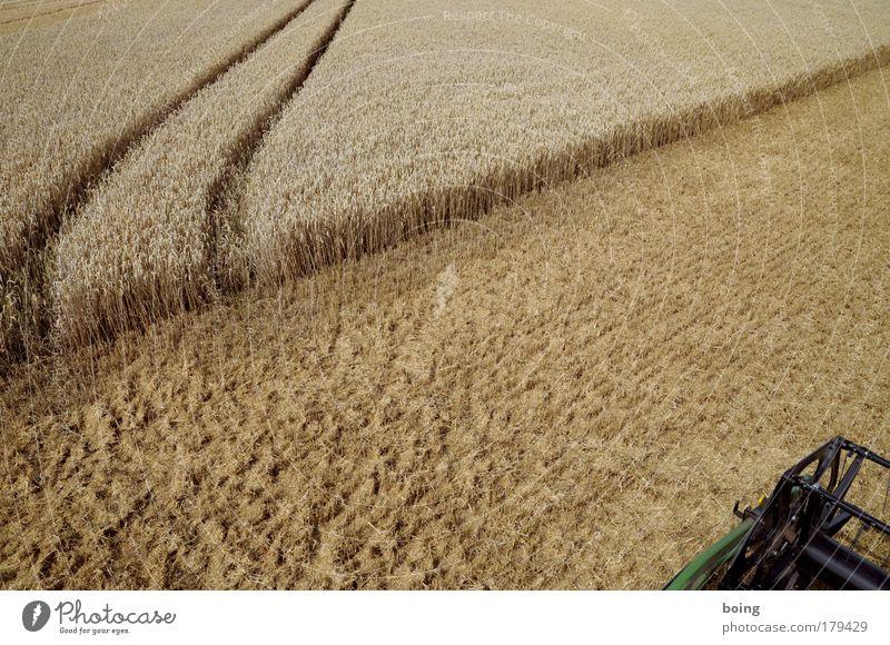 Drescher fahren Herbst Feld Getreide Landwirtschaft Ernte Backwaren Weizen Teigwaren Fahrbahn Gerste Beruf Roggen Getreidefeld Erntedankfest
