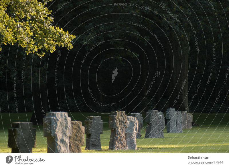 deutsche Kriegsgräberstätte Friedhof Grabstein Schatten historisch Tod Ast