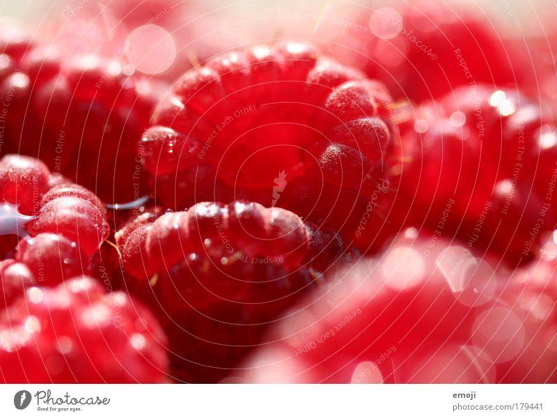 400 BEEREN / rot rot rot Ernährung Beeren Gesundheit Frucht frisch natürlich Ernte Lebensmittel Bioprodukte Himbeeren fruchtig Landwirtschaft