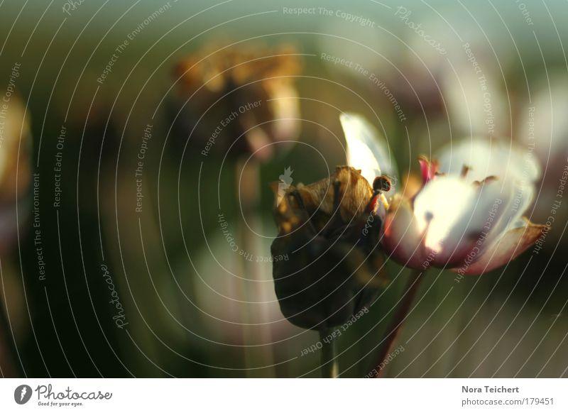 Zusammenhalt Natur schön alt Pflanze Sommer Tier Herbst Wiese Blüte Glück träumen Landschaft Stimmung Feld Umwelt frisch