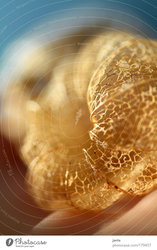 """""""322"""" Farbfoto Außenaufnahme Nahaufnahme Detailaufnahme Makroaufnahme Menschenleer Tag Licht Sonnenlicht Starke Tiefenschärfe Zentralperspektive Umwelt Natur"""