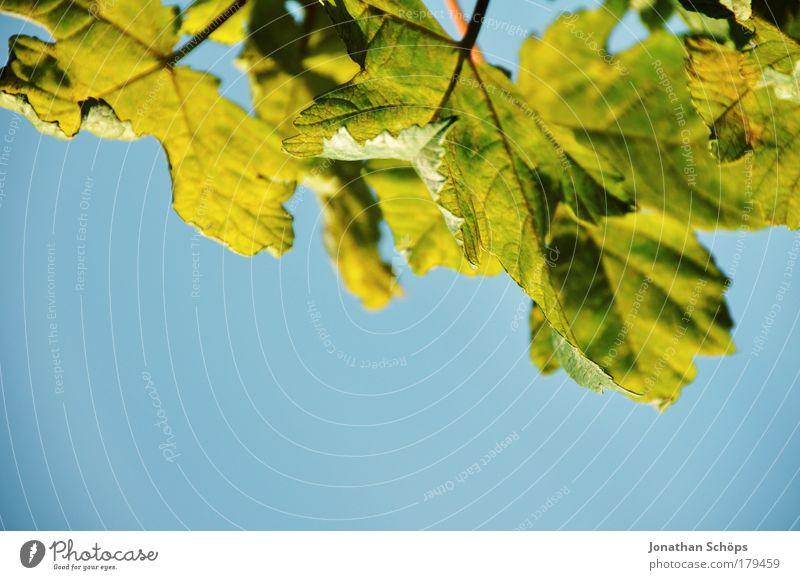 grün/blau Umwelt Natur Schönes Wetter Blatt Grünpflanze Blattgrün Blattfaser geteilt Detailaufnahme Perspektive Faser Gefäße Hintergrundbild Freiraum wahrnehmen