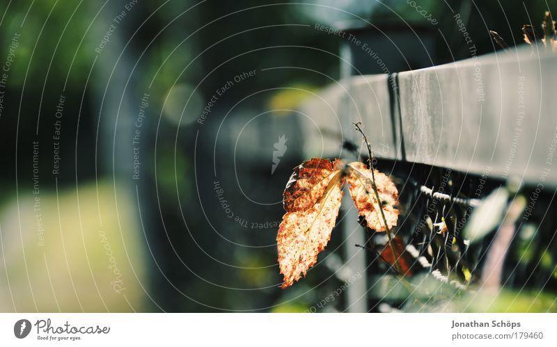 Am Zaun ein Blatt Natur grün Pflanze Blatt Einsamkeit gelb Leben Gefühle braun klein Zufriedenheit gold Hoffnung Wachstum Vergänglichkeit einzigartig