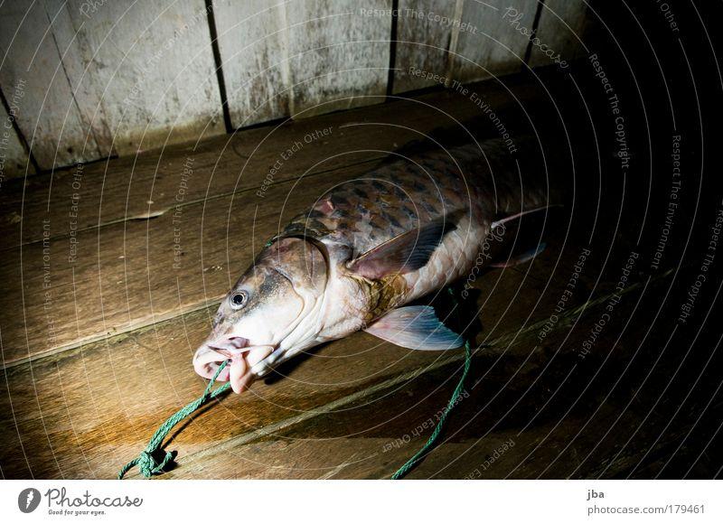 Sapan Natur Ferien & Urlaub & Reisen Tier Ferne liegen Lebensmittel Insel Ernährung Fisch Fisch einfach Asien Balkon Hütte Urwald Sommerurlaub