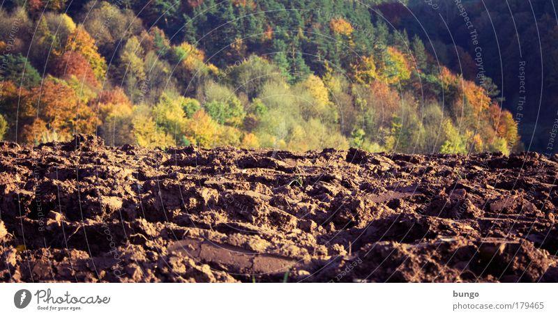 ager silvaque Natur grün Herbst Landschaft braun Feld Umwelt Erde Wachstum Boden Wandel & Veränderung Landwirtschaft Ackerbau Furche Aussaat