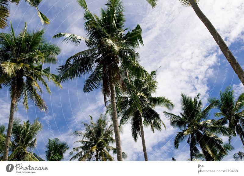Palmenhimmel Natur Himmel Meer Sommer Strand Ferien & Urlaub & Reisen Wolken Ferne Wald Kraft warten hoch Ausflug Wachstum Insel Tourismus