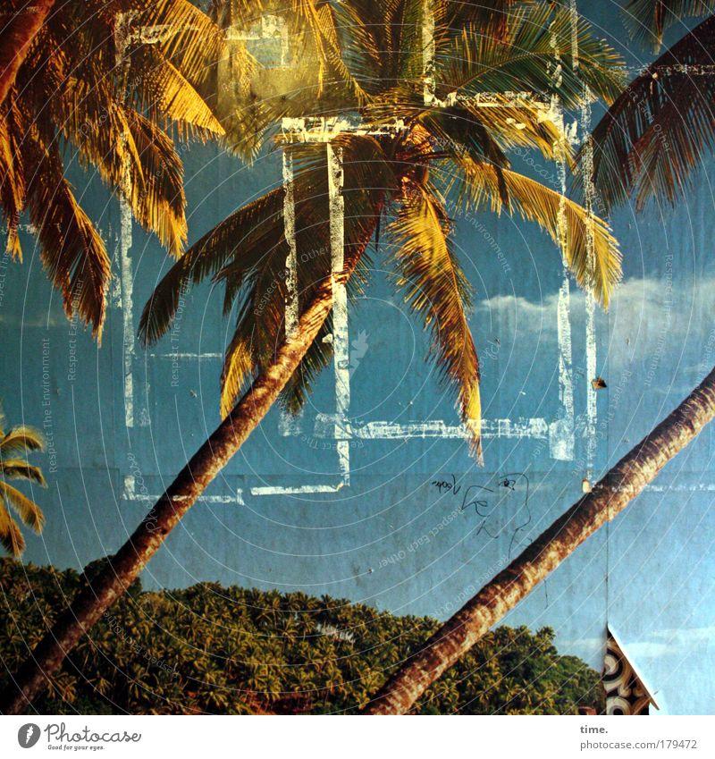 Die Vertreibung aus dem Paradies Natur Landschaft Park Stimmung Romantik Verantwortung achtsam Neugier Fotografie Tapete Fototapete Palme Strand Altbau Wand