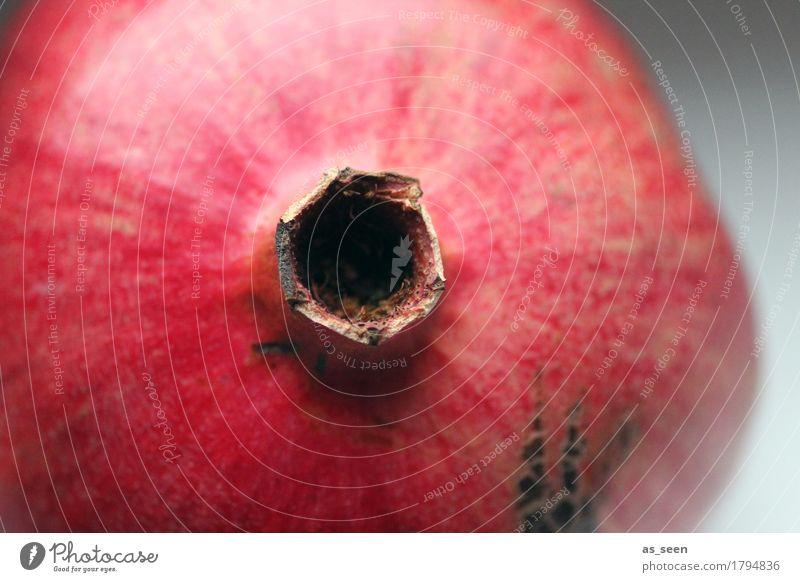 Granatapfel Natur Pflanze Weihnachten & Advent Farbe rot Winter Leben Blüte Herbst Lifestyle Lebensmittel Design Frucht frisch ästhetisch genießen