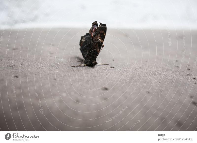 Struppi Menschenleer Terrasse Steinboden Schmetterling Flügel Tagpfauenauge hocken alt kaputt trist braun grau Vergänglichkeit Farbfoto Gedeckte Farben