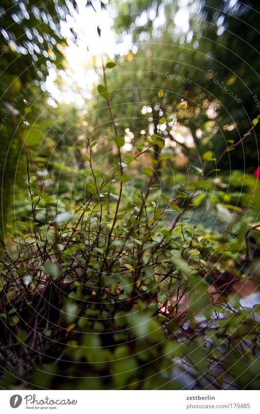 Balkonpflanze Baum Blume Pflanze Blatt Blüte Sträucher Grünpflanze Textfreiraum Blattgrün Grünfläche