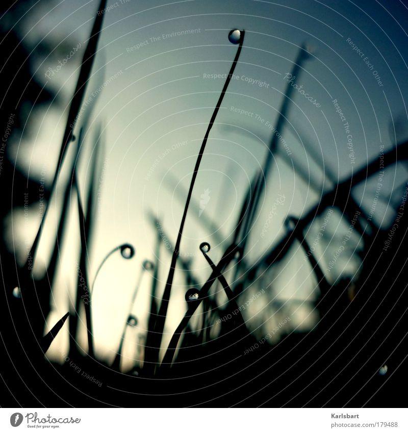 tautröpfchen. Himmel Natur Wasser schön Pflanze Einsamkeit Wiese Leben kalt dunkel Umwelt Gras Traurigkeit glänzend nass Design