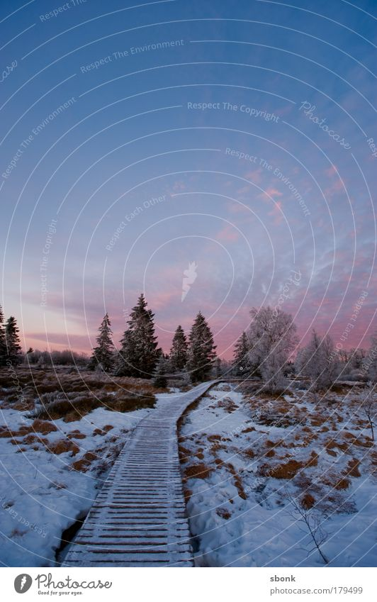 verkältet Natur Baum Ferne kalt Schnee Wege & Pfade Landschaft Eis Umwelt groß frei Frost Unendlichkeit lang Schlamm Moor