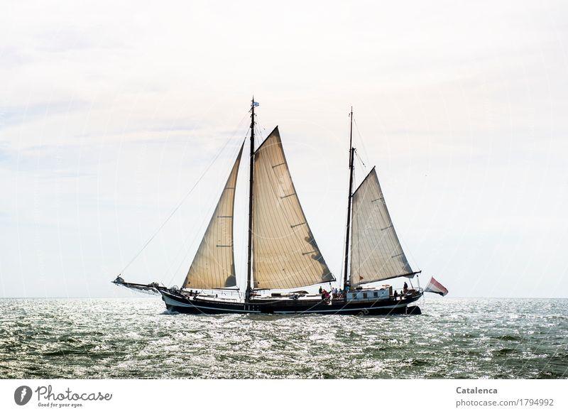 Ahoi Segeln Natur Wasser Horizont Sonnenlicht Sommer Schönes Wetter Nordsee Plattboot Bewegung entdecken glänzend ästhetisch Flüssigkeit braun grau silber