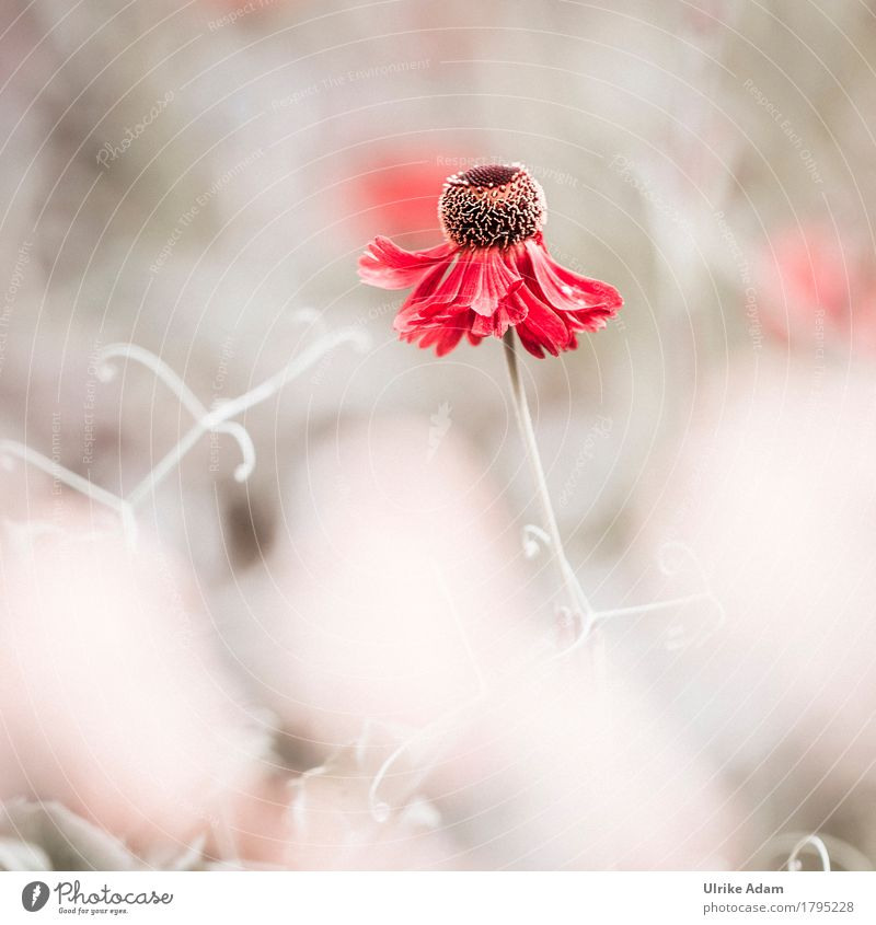 Farbtupfer elegant Design harmonisch Erholung ruhig Häusliches Leben Garten Innenarchitektur Dekoration & Verzierung Bild Muttertag Hochzeit Natur Pflanze