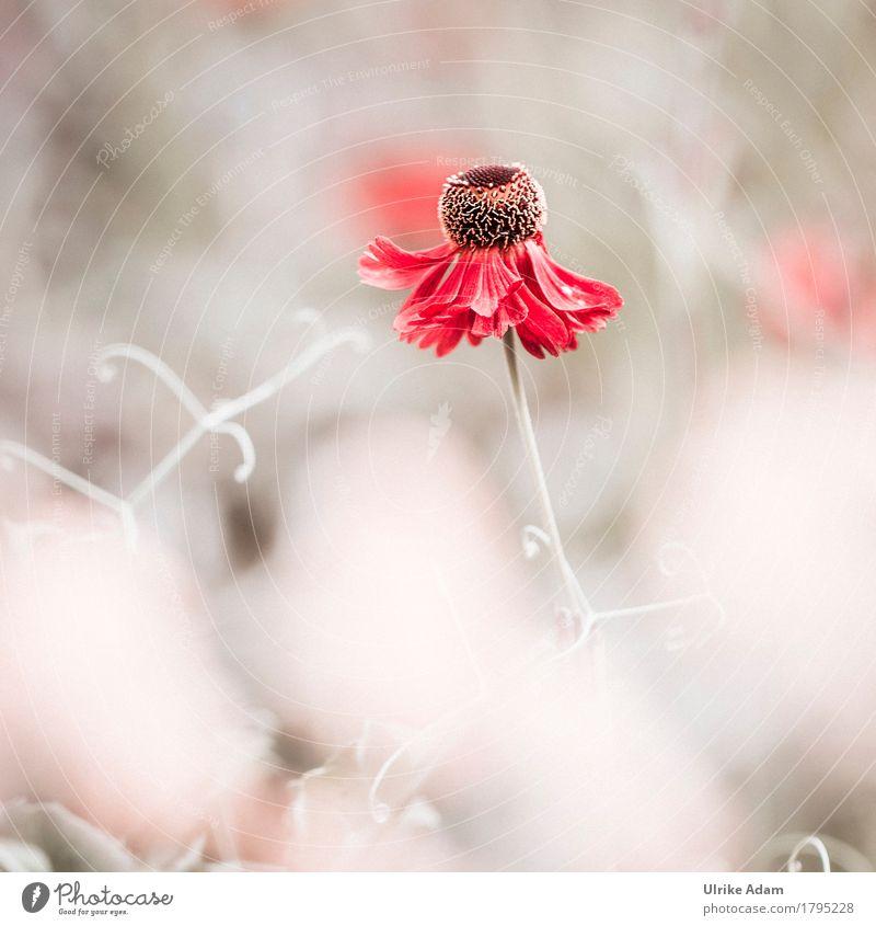 Farbtupfer Natur Pflanze Sommer schön Blume rot Erholung ruhig Blüte Innenarchitektur Herbst Garten Design Park Häusliches Leben Dekoration & Verzierung