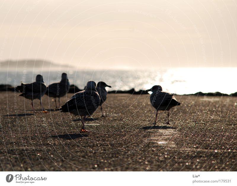 Abschiedsstimmung Meer Ferne Gefühle Stimmung Vogel gehen Tiergruppe Ende Sehnsucht Möwe Schwarm Sonnenuntergang Lebensraum