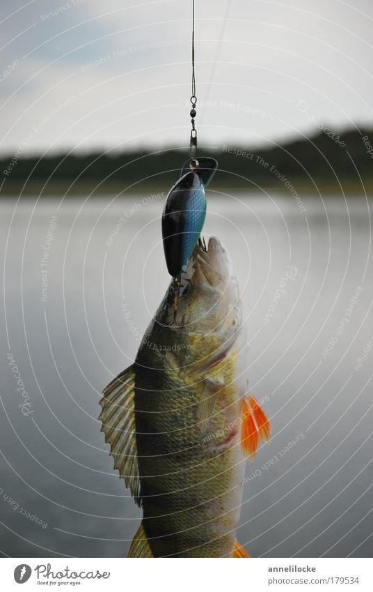 mitgehangen - mitgefangen Natur Wasser Ferien & Urlaub & Reisen Tier Landschaft Ernährung kalt See Wasserfahrzeug Wildtier Freizeit & Hobby Erfolg nass Tourismus frisch Fisch