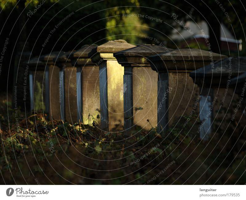 Sunlit Graves alt Pflanze Sonne Blatt ruhig Herbst Tod Traurigkeit Park Kirche Sträucher Trauer Frieden Schönes Wetter Moos Friedhof