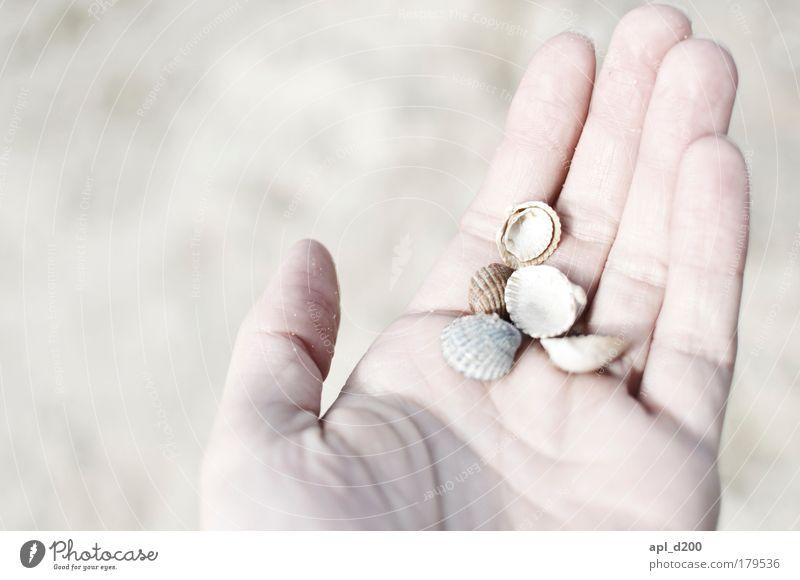 Handvoll Urlaub Mensch Hand weiß Ferien & Urlaub & Reisen Meer Sommer Strand Erwachsene Zufriedenheit maskulin Insel ästhetisch Fröhlichkeit Tourismus festhalten 18-30 Jahre