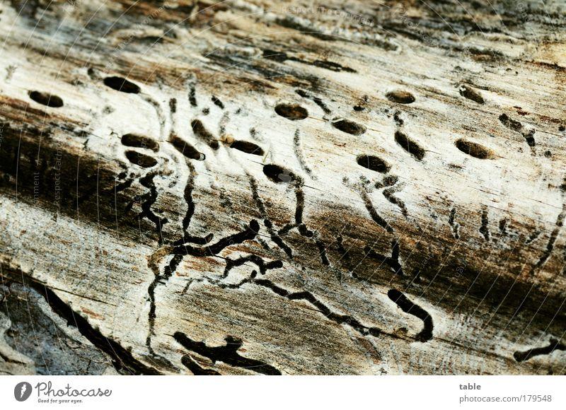 tot Farbfoto Gedeckte Farben Makroaufnahme Landwirtschaft Forstwirtschaft Umwelt Natur Pflanze Baum Totholz Baumstamm Holz alt Fressen dehydrieren dunkel