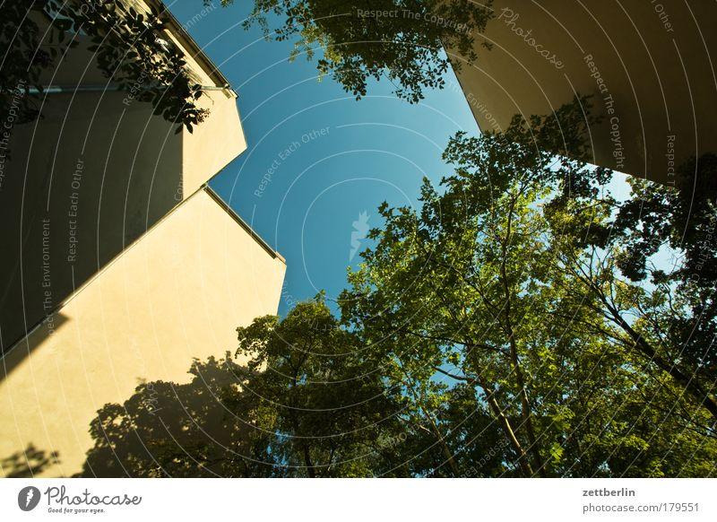 Überraschung Himmel Baum Sonne grün Pflanze Sommer Blatt Haus Wolken Mauer Gebäude Hinterhof hinten Mieter Stadthaus Sauerstoff