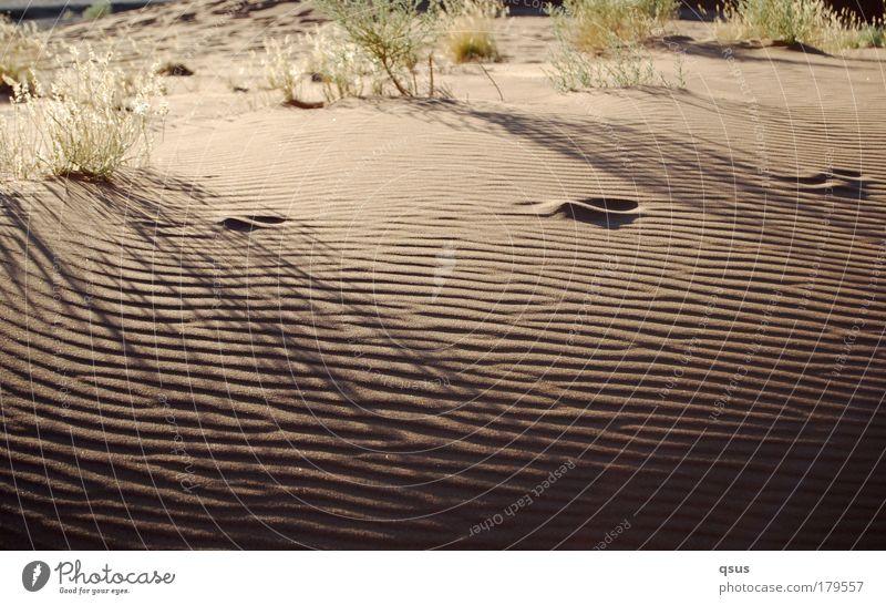 Moiré Sand Morgen Wüste Wellen Grasbüschel Strukturen & Formen Schatten Dürre Fußspur Einsamkeit Gegenlicht