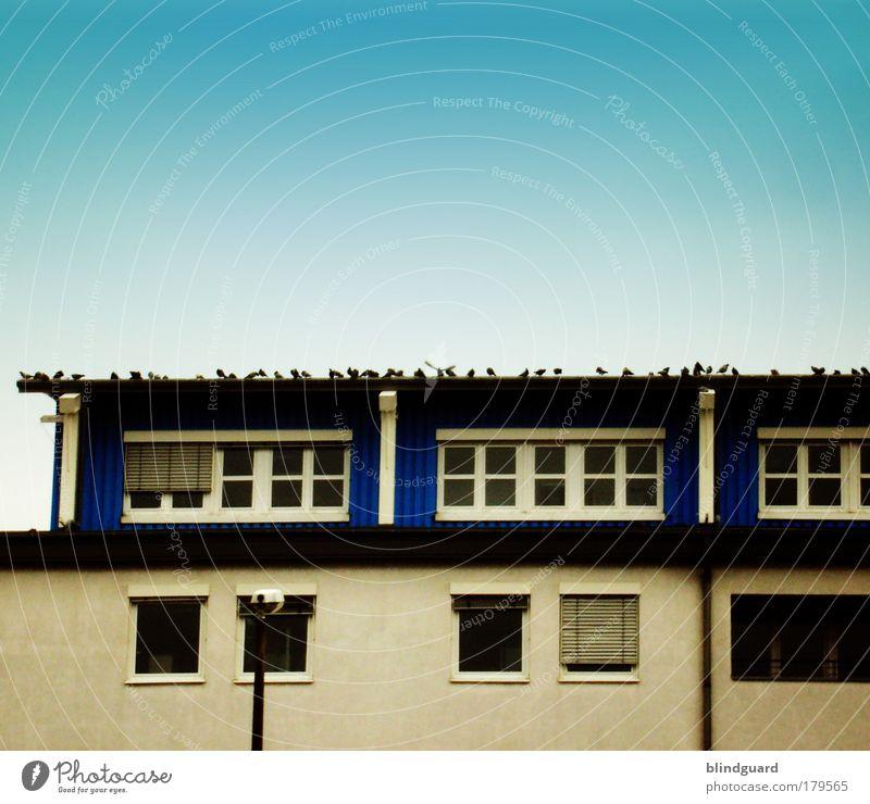 Dachkundgebung Farbfoto Außenaufnahme Menschenleer Textfreiraum oben Tag Hochhaus Bauwerk Gebäude Fenster Dachrinne Vogel Taube Flügel Stein Beton Glas Metall