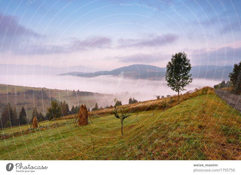 Himmel Natur Ferien & Urlaub & Reisen blau grün weiß Baum Landschaft Wolken Ferne Wald Berge u. Gebirge Umwelt Wiese Herbst natürlich