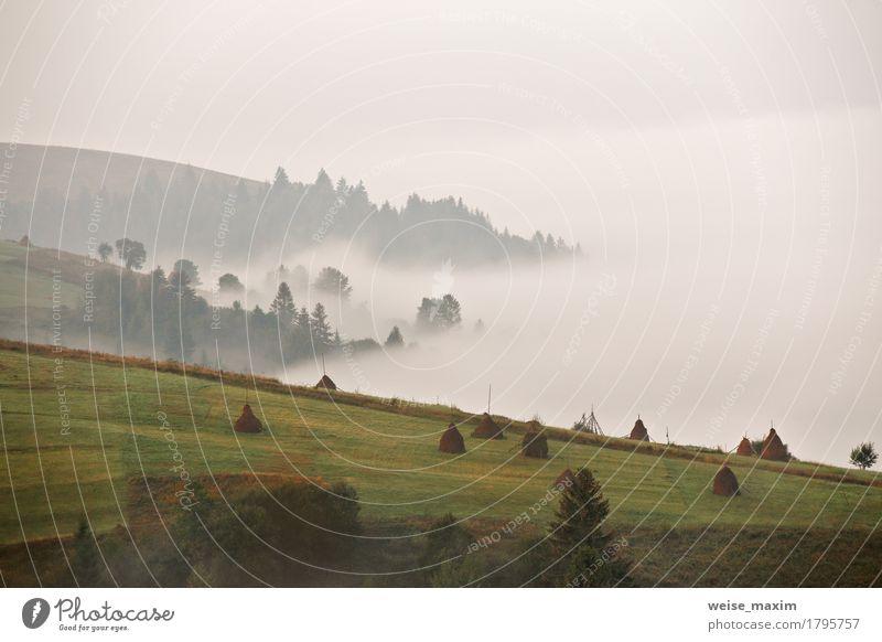 Nebeliger Morgen des Herbstes September in den Bergen Natur Ferien & Urlaub & Reisen blau Sommer grün weiß Baum Landschaft Ferne Wald Berge u. Gebirge Umwelt