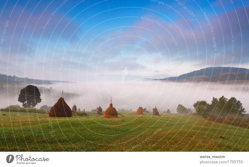 Nebeliger Morgen des Herbstes September Himmel Natur Ferien & Urlaub & Reisen Pflanze blau grün schön weiß Baum Landschaft Wolken Ferne Wald Berge u. Gebirge