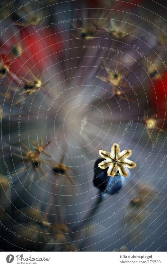 Ist denn heute Mo(h)ntag? Natur schön alt Blume blau Pflanze Farbe dunkel Herbst Umwelt ästhetisch Vergänglichkeit einzigartig natürlich außergewöhnlich