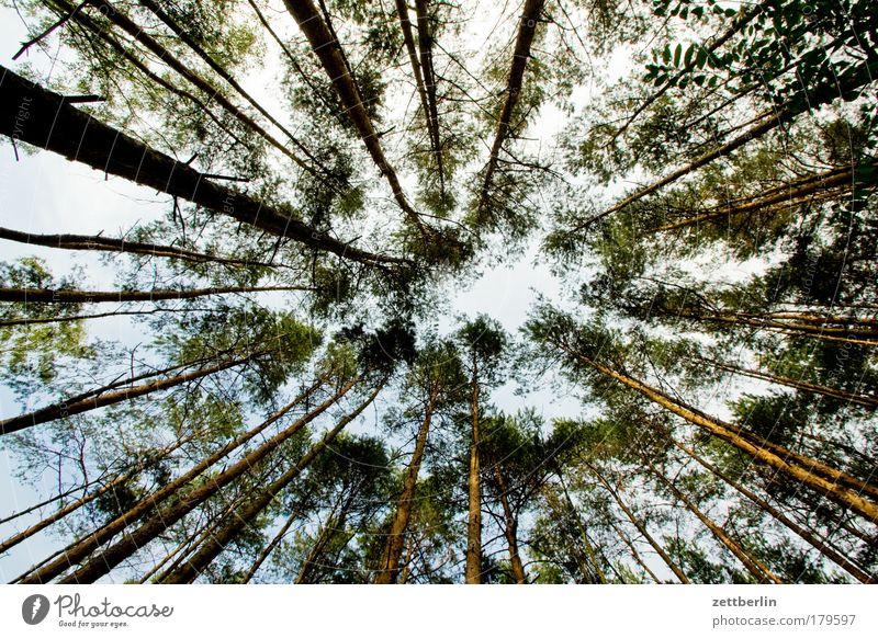 Waldfrosch Baum Sonne Sommer Herbst Tanne Baumstamm Brandenburg Kiefer Nadelwald