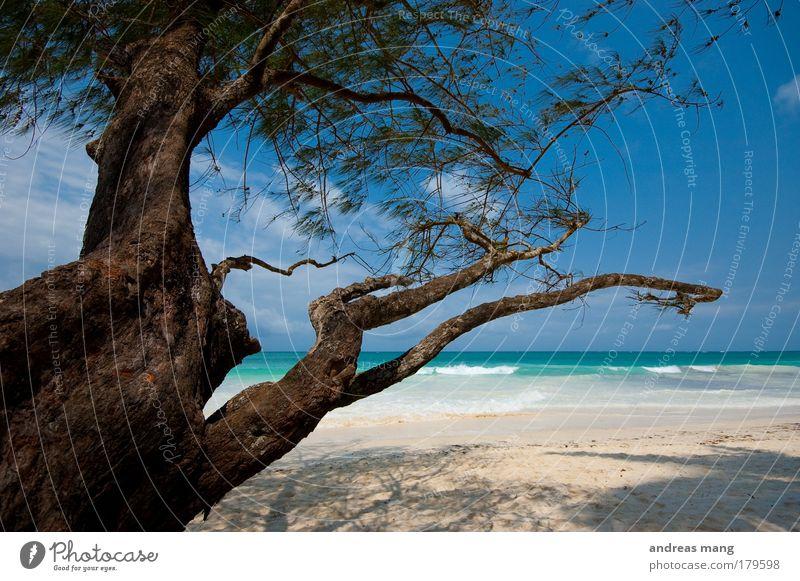 Wind & Water Natur Wasser alt Himmel weiß Baum Meer blau Sommer Strand Ferien & Urlaub & Reisen Erholung träumen braun Küste Horizont