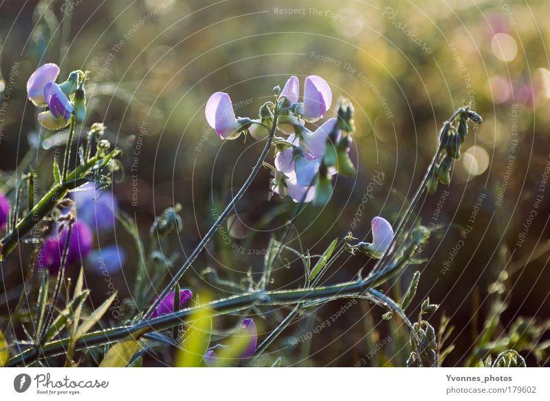Herbsttag Farbfoto mehrfarbig Außenaufnahme Morgen Morgendämmerung Licht Sonnenlicht Sonnenstrahlen ruhig Sommer Umwelt Natur Landschaft Pflanze Tier Erde