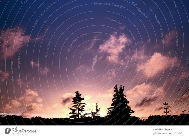 Clowdy sunset Luft Himmel Wolken Horizont Sonnenaufgang Sonnenuntergang Herbst Baum Unendlichkeit schön blau violett schwarz ruhig Stimmung Farbfoto mehrfarbig