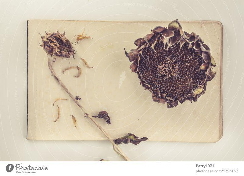 Sonnenblumen Natur Pflanze Blume Nutzpflanze Papier Zettel alt retro trocken braun gelb ruhig Nostalgie Verfall Vergänglichkeit Wandel & Veränderung Zeit welk