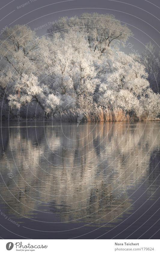 """Die """"etwas"""" kältere Jahreszeit. Gedeckte Farben Außenaufnahme Menschenleer Abend Dämmerung Schwache Tiefenschärfe Zentralperspektive Totale Umwelt Natur"""